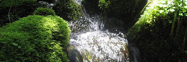 白神山地の湧き水